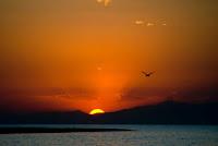 Sunset Birds - Photo by Vlad Panov on Unsplash