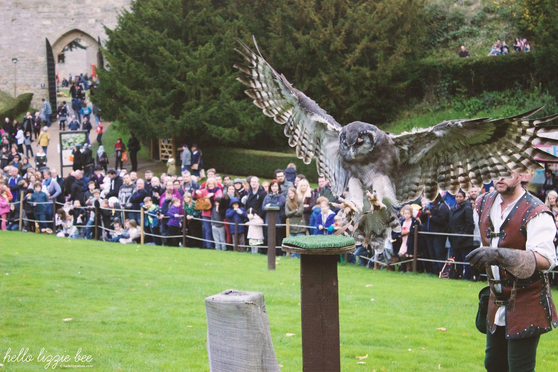 eagle owl, flight of the eagles