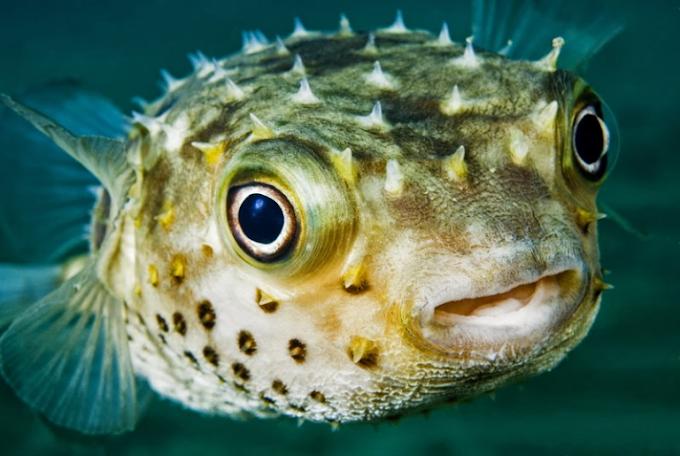 Kpando assembly bans sale of 'killer' fish