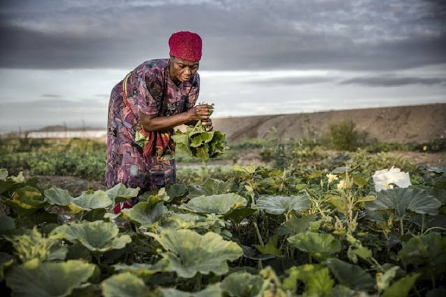 FAO and WFP launch global consultation to help alleviate hunger and transform agri-food systems