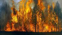 (ВИДЕО) Пожар в лесу