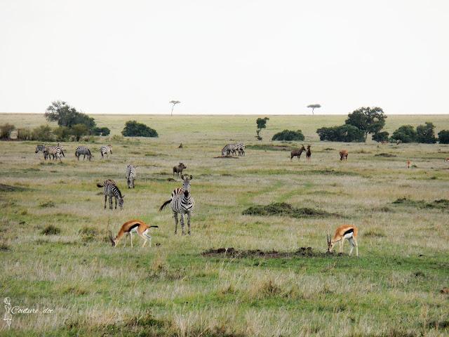 safari, zebry, antylopy