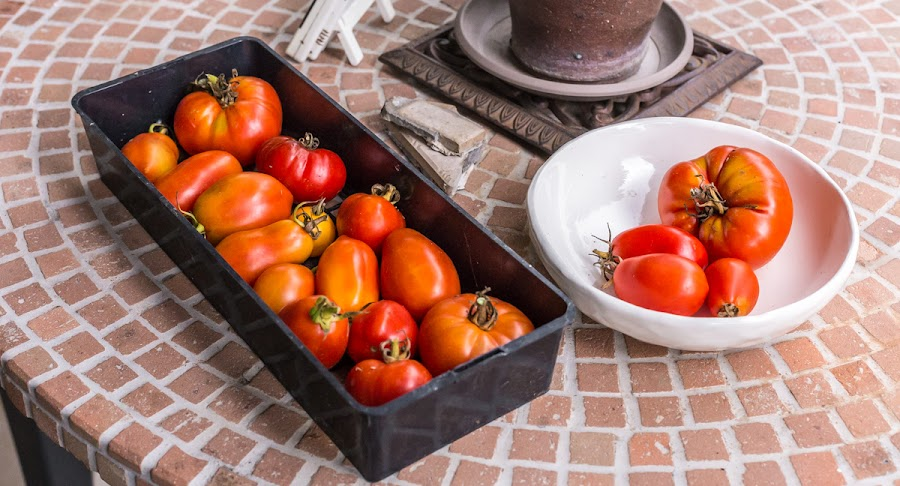 The last of the tomatoes