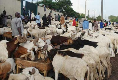 NTIC shares 60 cows among 2, 000 families in Lagos, and ogun state