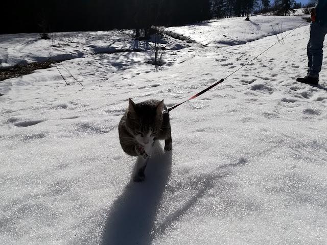 Spacer z kotem po śniegu