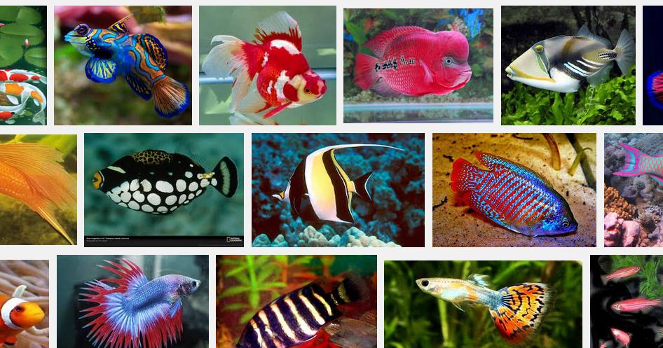 Ide Dan Peluang Usaha Pembenihan Ikan Hias