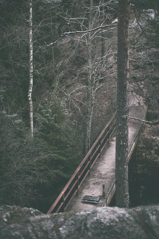 Nuuksio, Espoo, Kansallispuisto, luonto, nature, luontokuva, naturephotography, photographer, valokuvaaja, Frida Steiner, Espoo, Visualaddict, valokuvausblogi, Visualaddictfrida, valokuvaaminen, metsä, woods, park, national park, visitfinland, Finland, Nordic, Scandinavia