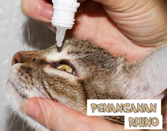 Cara Menangani Feline Rhinotracheitis
