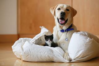 Consejos para vender una casa con mascotas