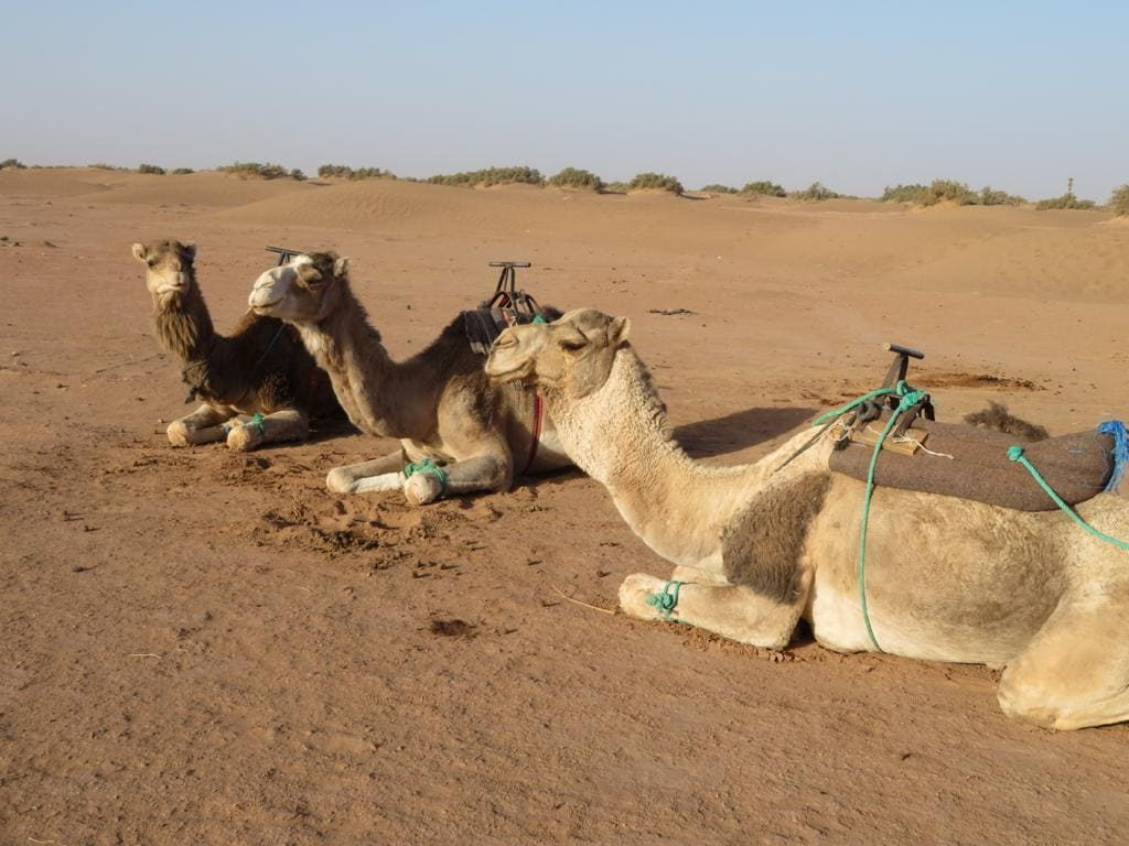 Camel trek nomadic adventure on the Sahara desert in Morocco