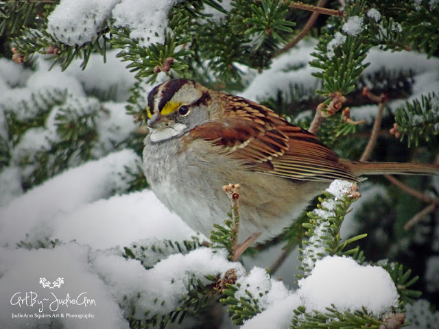 Winter Bird Photo