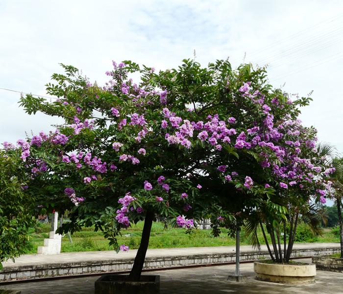 Penyesuaian Diri Tanaman Bunga Matahari Terhadap Cahaya Adalah Informasi Seputar Tanaman Hias