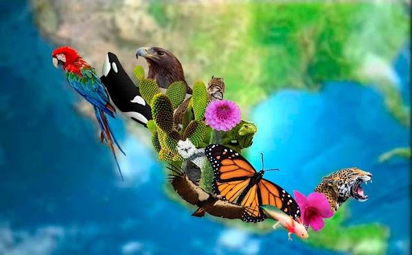 Biodiversidad: el paraíso perdido por Joel Sangronis Padrón