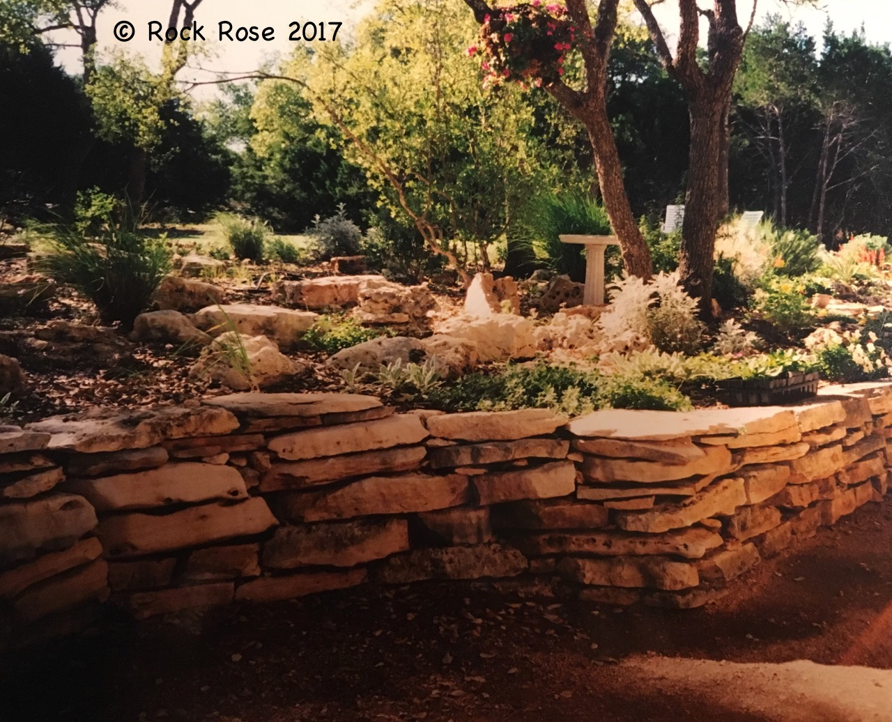 ROCK ROSE: HOW PAST AND PRESENT INFLUENCE YOUR GARDEN STYLE