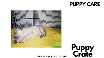 Puppy crate, Puppy, Crate, Puppy crate training, Puppy crate opening, Puppy crate set up, Puppy crate partition, Puppy crate training at night, Puppy crate training first night, Puppy crate crying, Puppy crate training schedule, Puppy crate training music, Puppy crate and playpen, Puppy crate training cesar millan, Puppy crate music, Puppy crate divider
