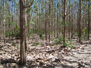 Investing in Tropical Trees: Issues and Alternatives for
