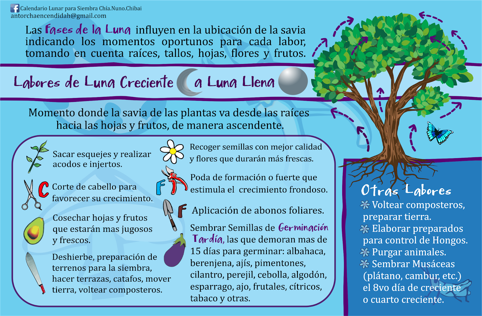 Calendario Lunar De Siembra.Calendario Lunar Para Siembra Chia Nuno Chibai