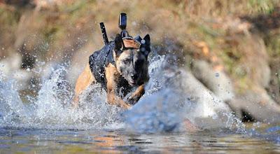 Raza perros policía