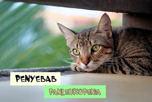 Panleukopenia pada Kucing PDF