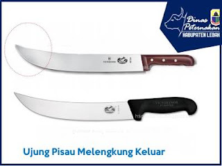 pisau untuk penyembelihan yang melengkung keluar