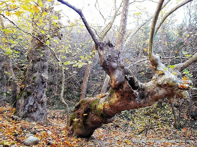 Trilha próxima ao monastério St Nicholaus - Meteora, Grécia