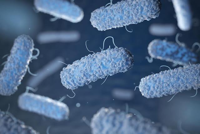 Perbedaan Antara Infeksi Bakteri dan Infeksi Virus