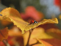 A close-up of a ladybug on a yellow autumn leaf.