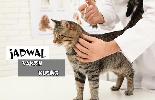 Vaksin Kucing Terdekat