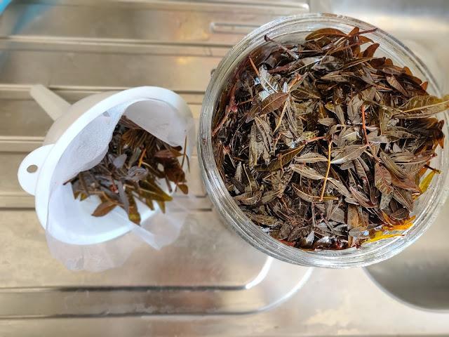 foglie di lentisco filtrate