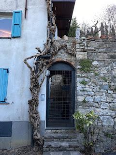 A wisteria vine frames a doorway on Via Torni.