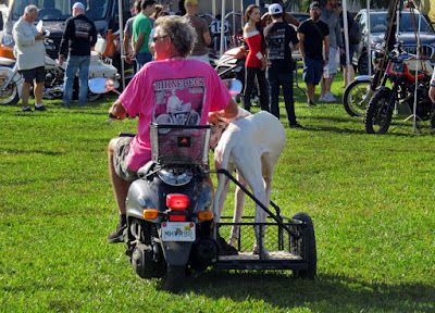 Big dog stands on wheeled platform attached to a scooter.