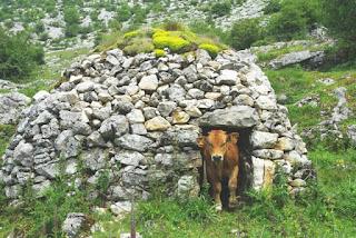 Teverga, braña de Los Fuexos, vaca saliendo de un corro