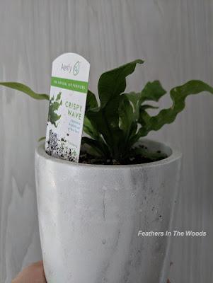 Ferns to clean air inside house