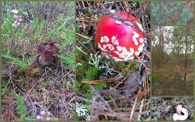 borowik prawdziwek grzyb w lesie