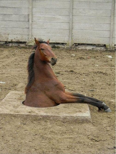 animals in funny positions