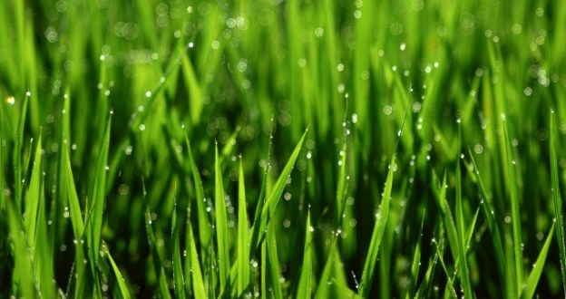 How to Put Natural Grass