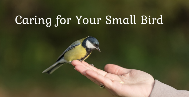 How to Care for Small Bird