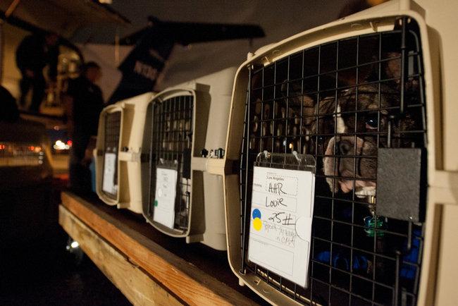 cachorro no bagageiro de aviao