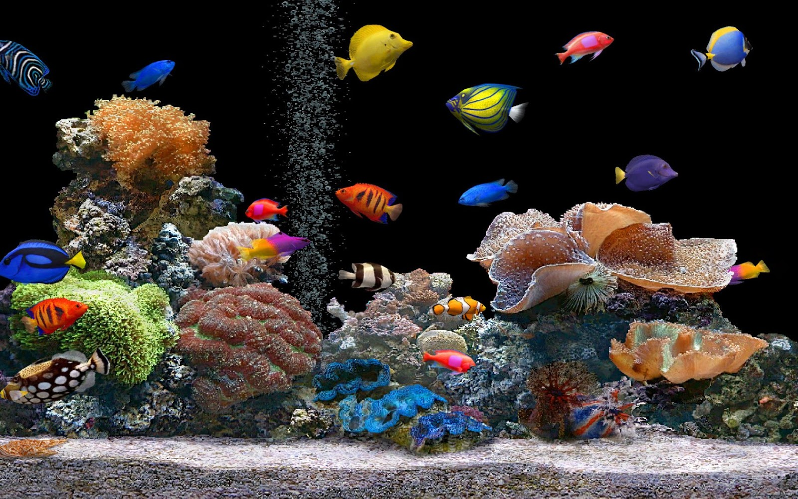 Free Latest Full HD Quality Desktop Wallpapers: Download Full HD 3D Aquarium Wallpapers