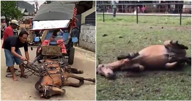 Terkapar Kelelahan, Kuda ini Terus Dicambuki Pemiliknya, Netizen Sangat Menyayangkan Hal itu