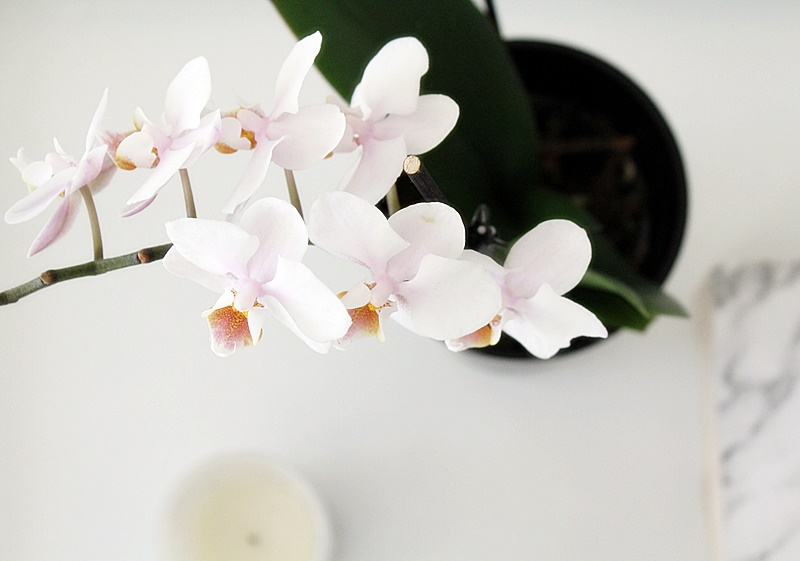 pale pink orchid scandinavian home