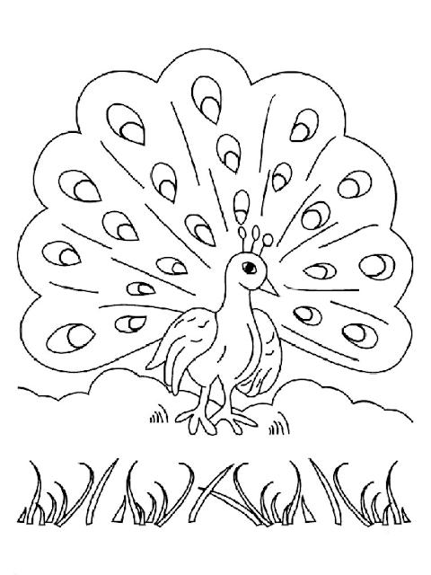 Gambar sketsa burung merak mudah