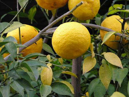 https://1.bp.blogspot.com/-j89c9d-iqIY/TutNGf8lTbI/AAAAAAAAGos/1u_6ztyvgVc/s1600/fruits.jpg