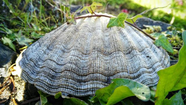 sea shell in the garden