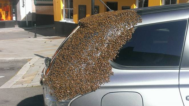 20K Bees Chased A Car For 2 Days To Rescue Their Queen Bee [Watch]