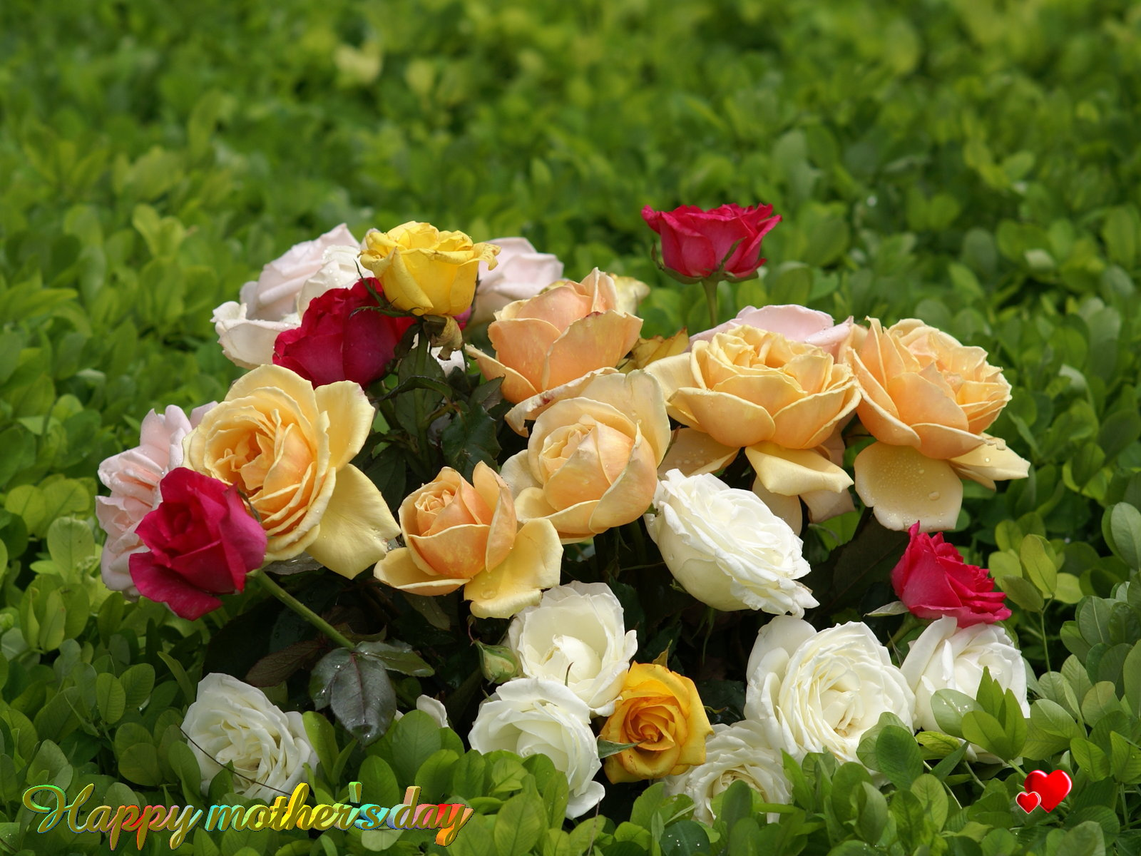 http://1.bp.blogspot.com/-j8CTpQUEuSo/T5kEsFNRXOI/AAAAAAAADfQ/7cPr3xft_MM/s1600/Mothers-Day-Roses-Bunch-Wallpaper.jpg