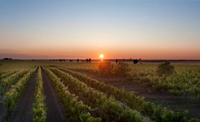 Conti Zecca winery Leverano in Salento