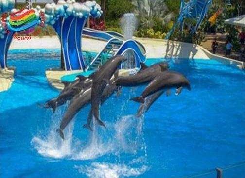 Dolphin Show - Sharm El Sheikh