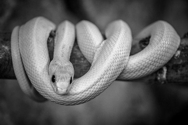 تفسير حلم الثعبان والحية للرجل وللحامل وللمتزوجة