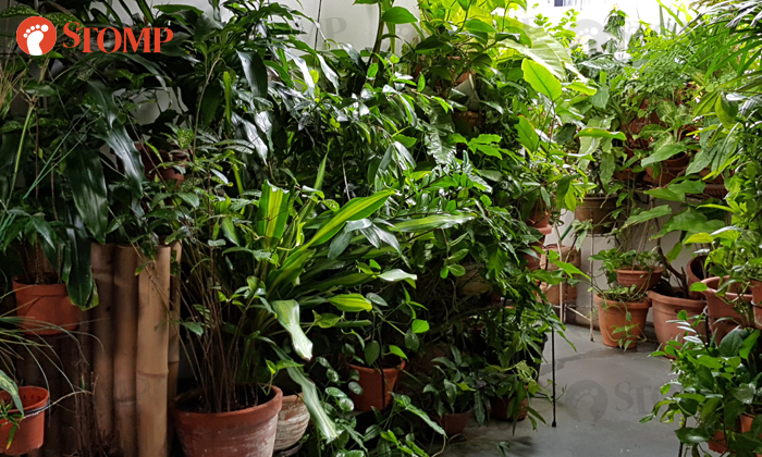Every time Stomper A steps out of her flat at Block 101 Pasir Ris Street 12, she is greeted by the sight of her neighbour's 'private jungle'.